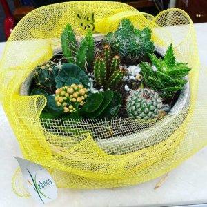 Centro cactus Poseidón