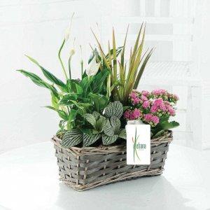 Cesta de plantas Tairet