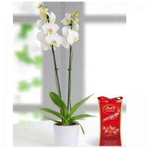 Planta Orquídea Deví