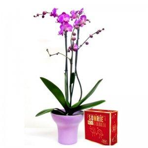 Planta Orquídea Ganesha