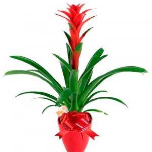 Planta Bromelia Nectar